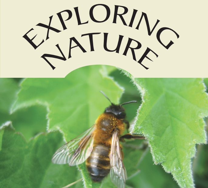 FREE nature events within the DLR area