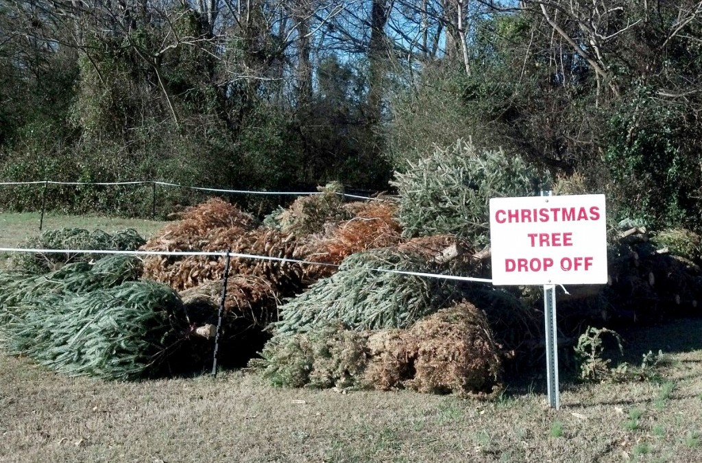 Illegal dumping of Christmas trees poses serious hazard to drivers.