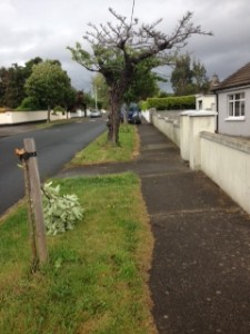 Photo of broken tree on Redesdale Road