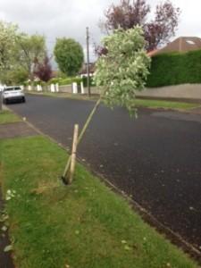 Photo of damaged tree