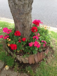Photo of flowers planted around trees