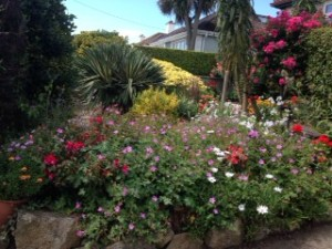 Photo of gorgeous garden in bloom