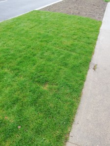 photo of grass verge reinstated after construction work