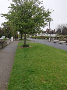 Photo of Vista of Trees Road Grass Verges