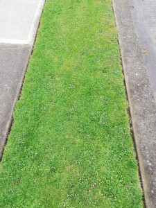 photo of well maintained grass verge
