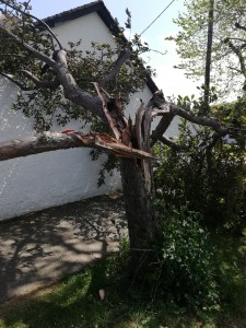 Redesale Tree damaged by wind May 22, 2020