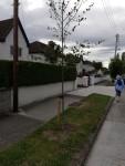 newtree_thornhill
