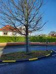 Traffic calming island on Trees Road lower freshly painted 12/2020