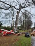 East Avenue Tree felling in progress