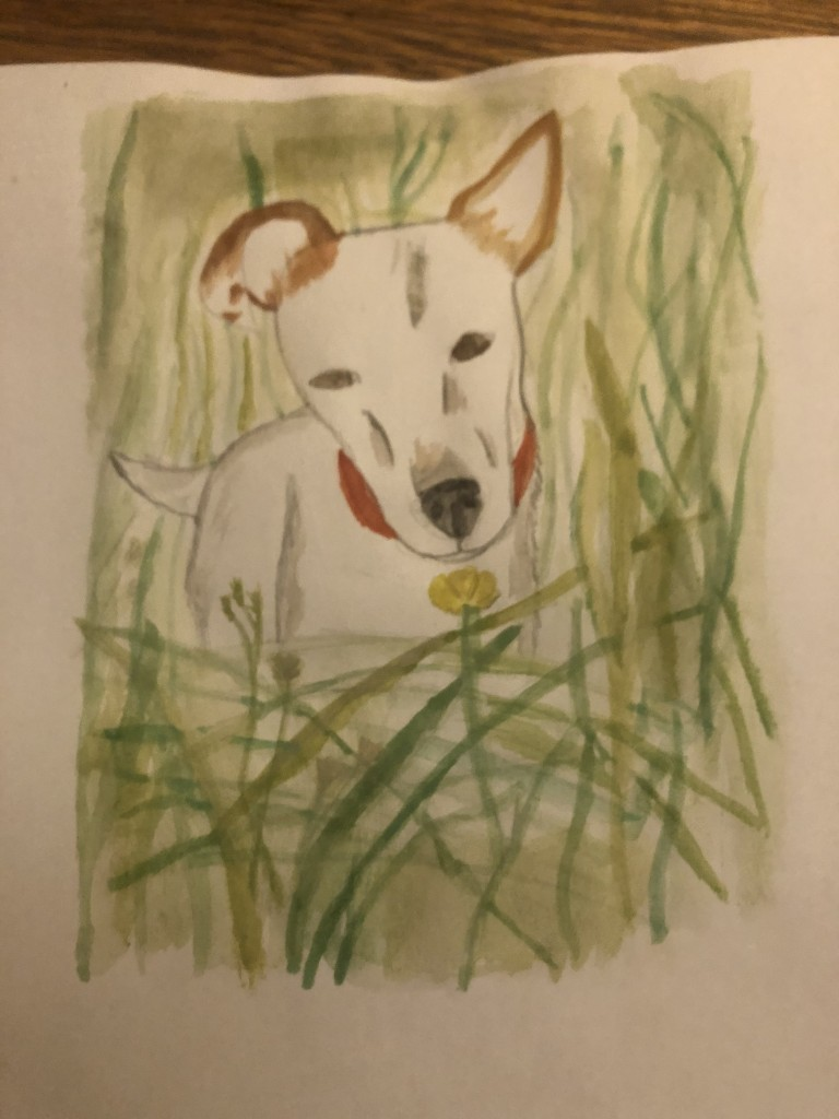 This picture was inspired by my dog Dobby, he likes running in long grass and I took a photo of him sniffing a buttercup. It is a watercolour painting.'