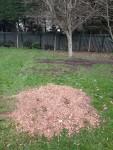 cherrygarth_green_20210304_treesfelled
