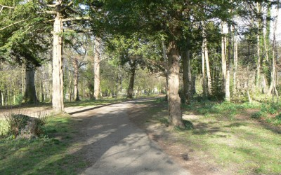 The Woods in the Deerpark 1