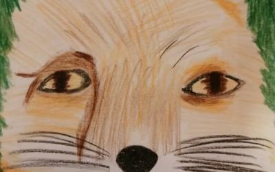 'Mrs Fox' by Emma Bracken (age 9)