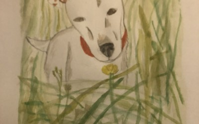 'Dog in the Grass' by Maria Daly (age 14)
