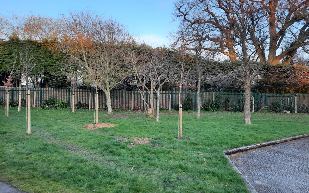 New Trees Cherrygarth Green