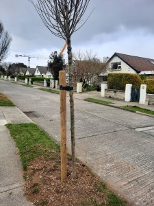 New tree planted on Cherrygarth