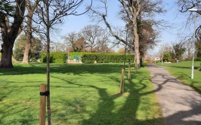 Deerpark: New Oak Trees & mature Prunus