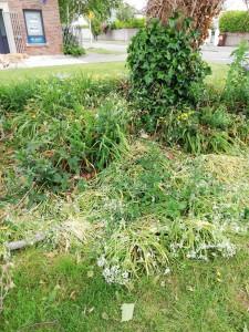 Trees Road Upper - overgrown flowerbed