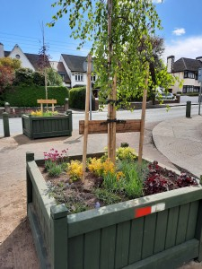 April 2021 - Planters Replenished with Maple Tree/ Weeping Birch, and pollinator-friendly perennials