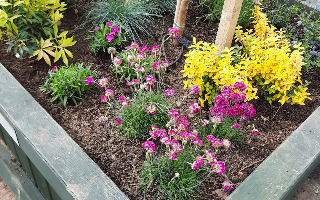 MMRA Community Gardening Project – The Planters