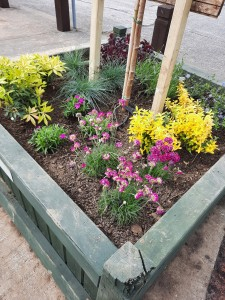 April 2021 - Planter Replenished with Maple Tree and pollinator-friendly perennials