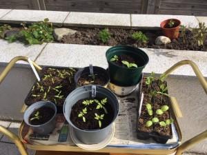 Vegetables Seedlings March 2021