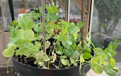 MMRA Seed & Plant Swap Group