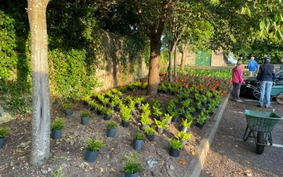 Redesdale Road Biodiversity Project – 500+ plants Planted!